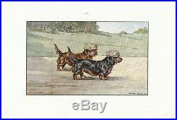 Document Ancien Dandie-Dinmont Terrier Monographie de Chien de Chasse 1965